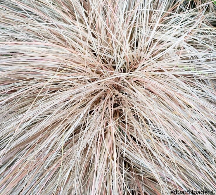 white_grass_web_2.jpg